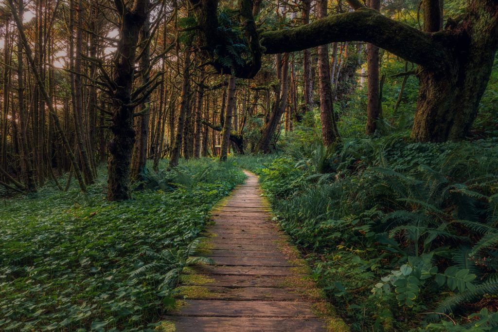 green witch forest nature