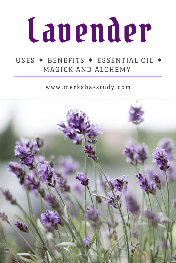 lavender benefits pinterest pin