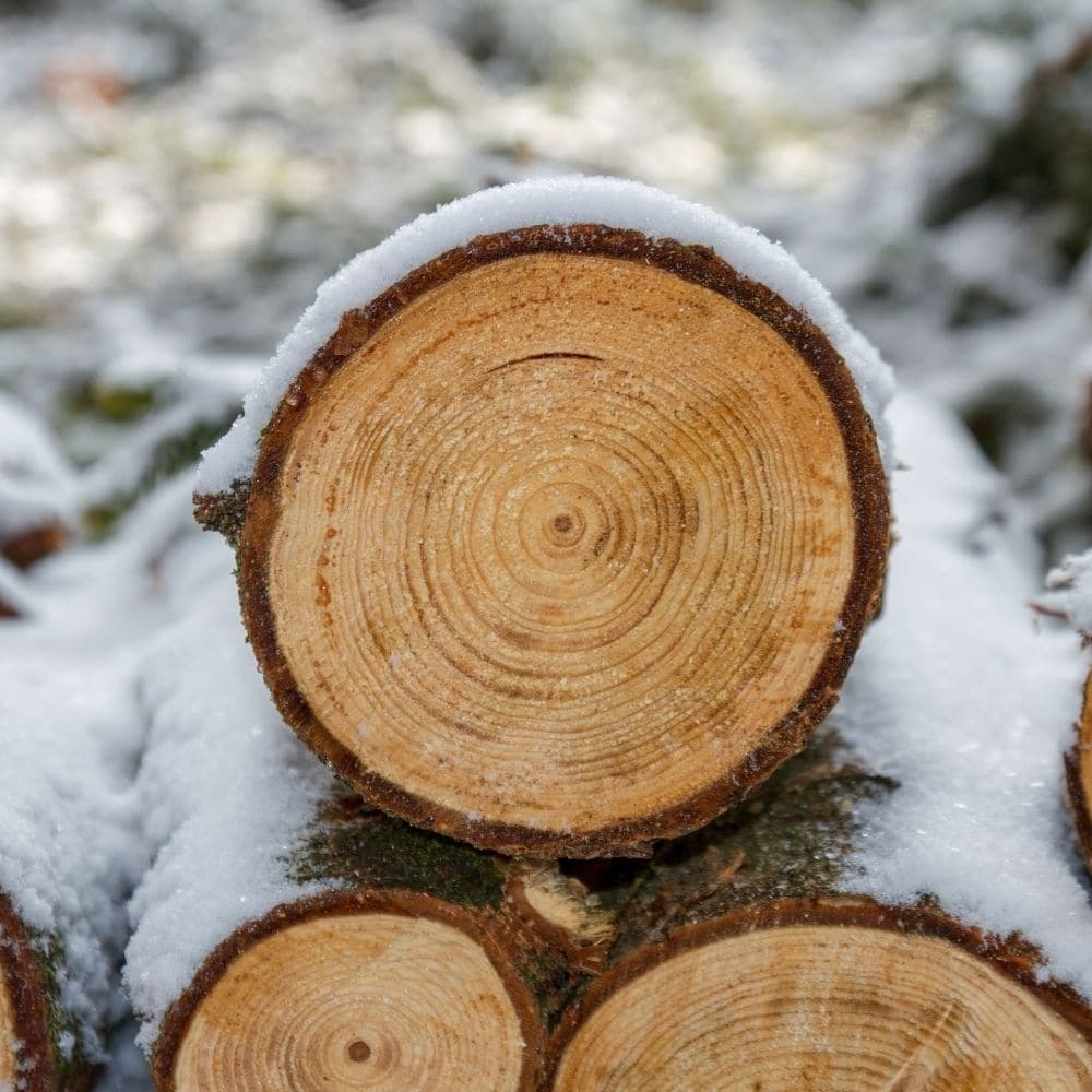 picture of a snowy yule log