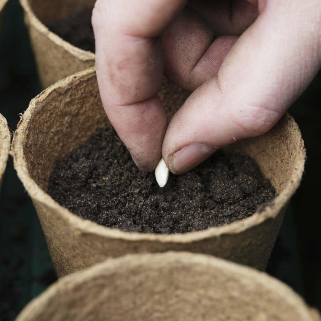 Photo of Planting seeds - one of the Ostara rituals