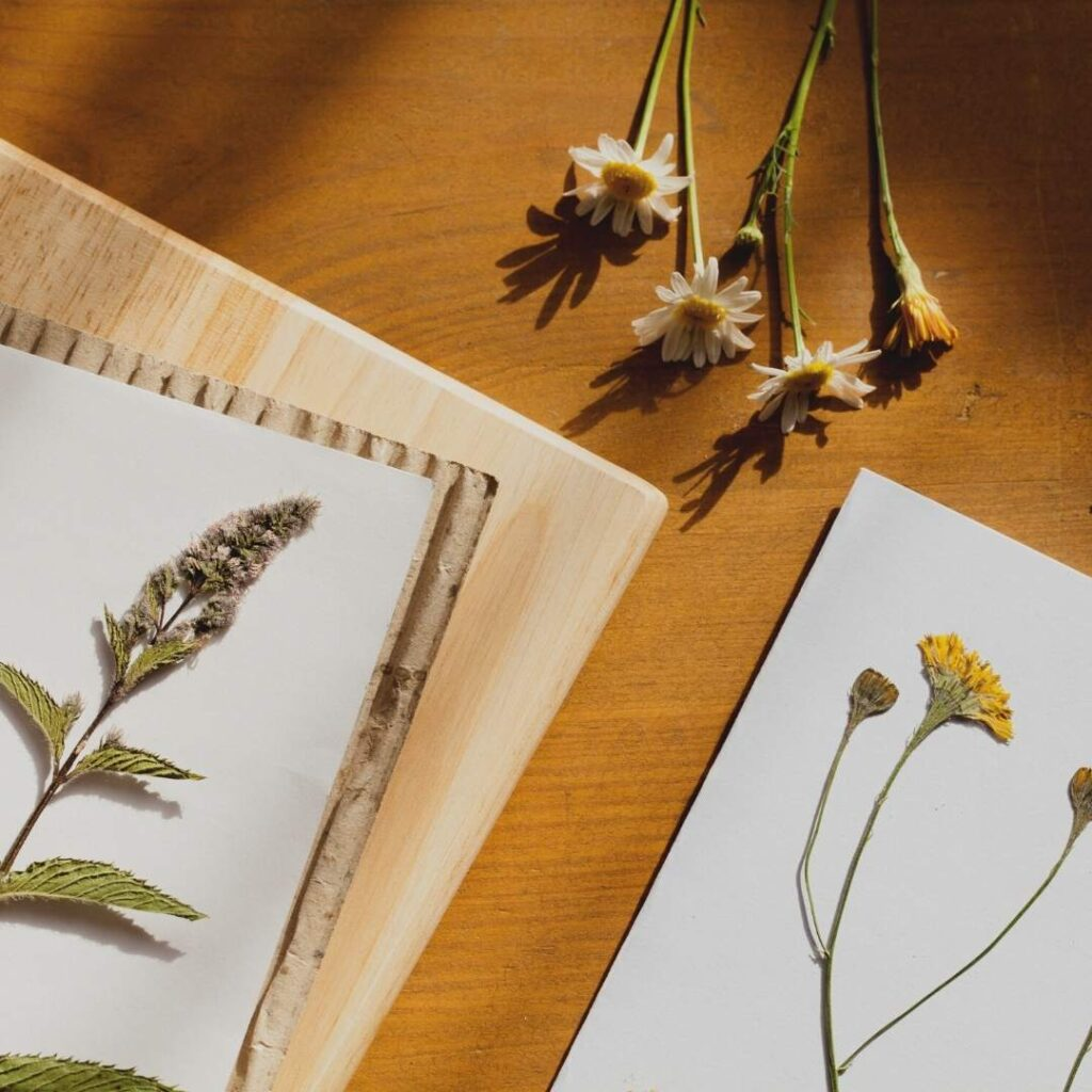 photo of herbarium of a green witch