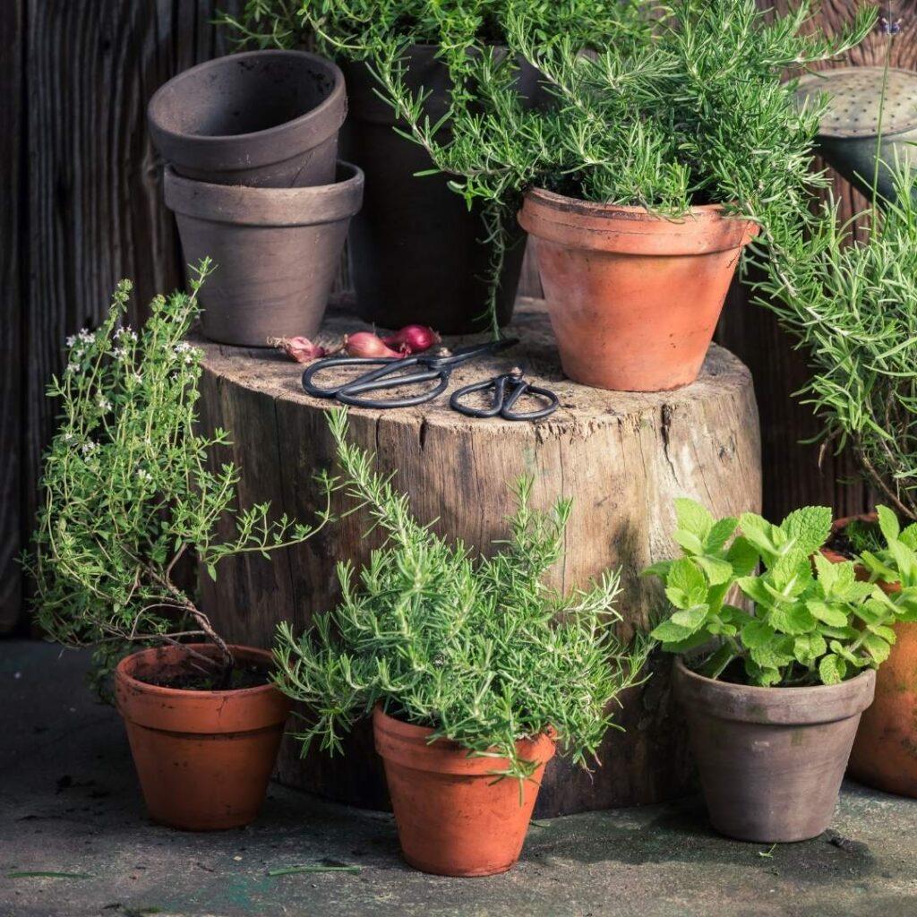 photo of kitchen witch herbal garden
