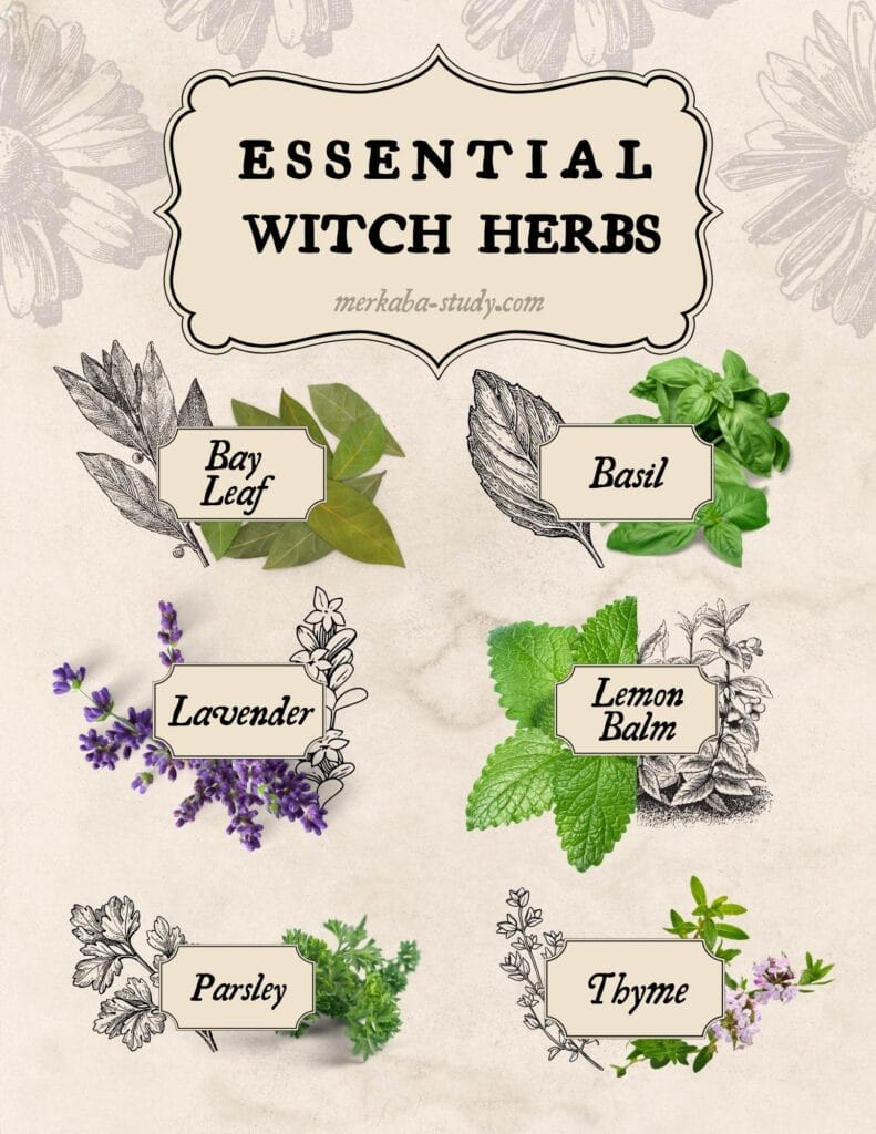 Essential witch herbs page
